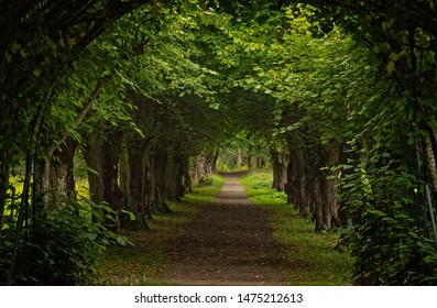 Walkway lane path with green trees in a forest