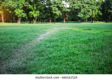 walkway on lawn and nature in the garden.