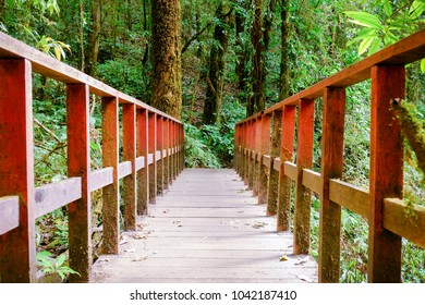 The walkway on the red wood bridge in natural forest.Perspective View Image.