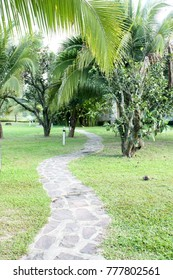 walkway on the yard