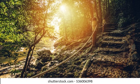 walkway or path in forest with sunny day