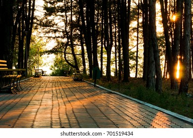 A walkway of paving tiles through the park on a summer evening
