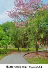 walkway with pink flower in garden at Thailand