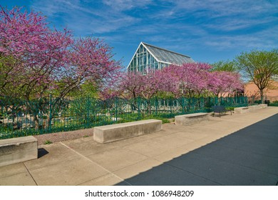 Walkway with Redbud Trees and Glass Conservatory