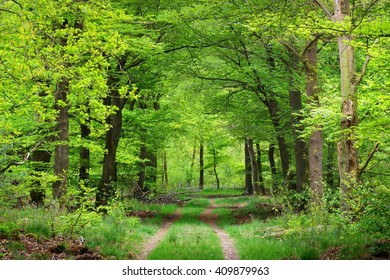 Walkway in a spring forest in Veluwe, the Netherlands