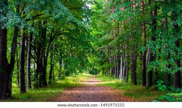 Walkway stretching deep into the woods between trees in summer