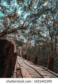 Walkway in the Sundarbans forest