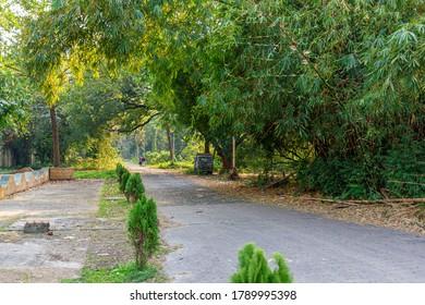 Walkway through the Acharya Jagadish Chandra Bose Indian Botanic Garden of Shibpur, Howrah near Kolkata.