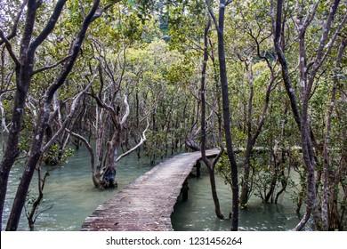 Walkway through the mangroves on the Paihia to Opua Coastal Walkway, North Island, New Zealand