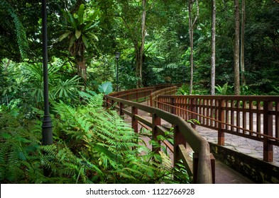 Walkway through the tropical ferns and trees of Bukit Timah Public Nature Park in Singapore