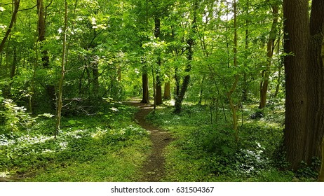 Walkway in underwood with trees and greenery inside the forest