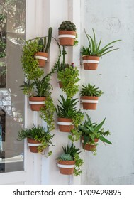 Wall arrangment of cacti and other plants on white wall outside.