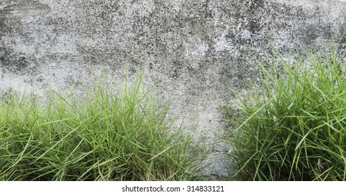 wall background photography