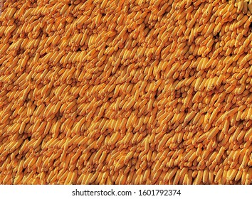 The wall of corn cobs
