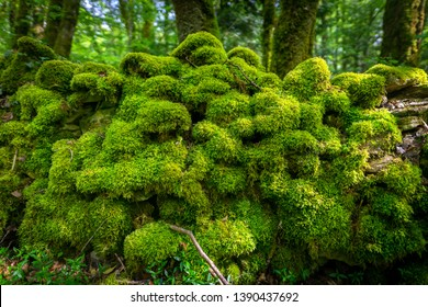 a wall covered with green moss in a forest