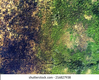 wall covered with moss texture