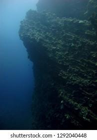 A wall dive in Molokai
