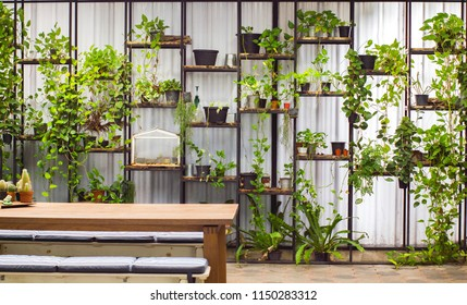 Wall of Epipremnum aureum or money plant one species of flower plant in black vase on steel shelf,white metal sheet texture,Cactus in brown pot on wooden table,Cushions on a chair,nature background.
