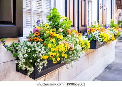 Wall exterior siding house architecture sidewalk and multicolored yellow flowers in planter as decorations in Charleston, South Carolina