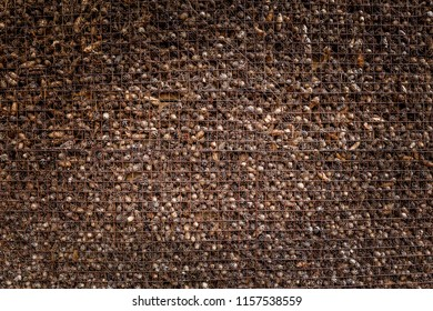 Wall of fir cones, can be used as a background with cones from fir tree.