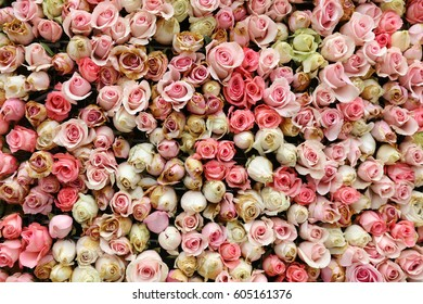 the wall flower with rose pattern at flower show