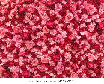 A wall full of rose buds. It's suitable for being romantic backdrop or backgrounds.