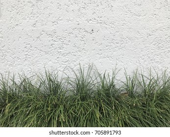 wall grass on the floor.