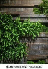 Wall with green fern