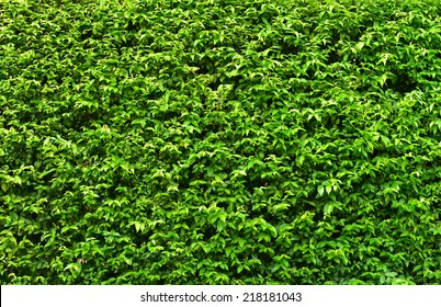 wall green leaf pattern for background
