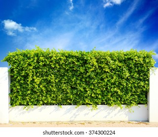 Wall green leaves and sky