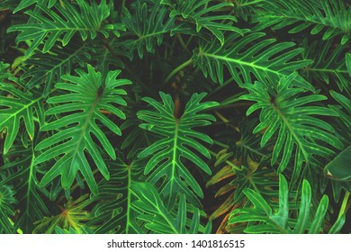 Wall green palm leaves. Leaves background or texture. Palm background.