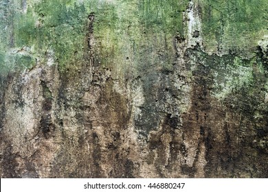 Wall with green stains and dirt on the surface