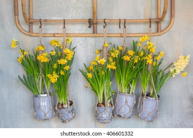 Wall hanging vases with tulips