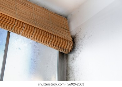 A wall with harmful, spreading black mold around the window blinds. Unhealthy living conditions, humid home concept.