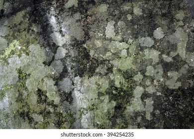 a wall with moss and mould