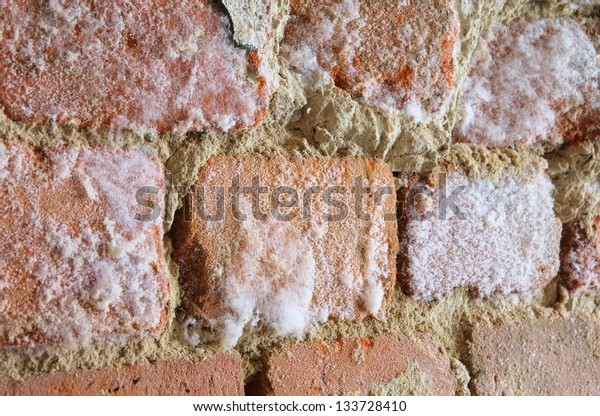 wall with mould fungus