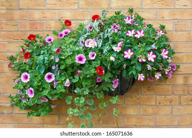 Wall mounted hanging basket with a range of summer flowers