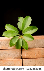 Wall with a plant, a concept on hope and immigration