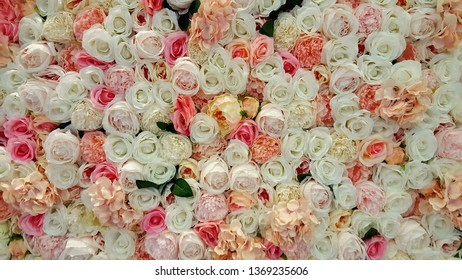 Wall of roses for background or texture.