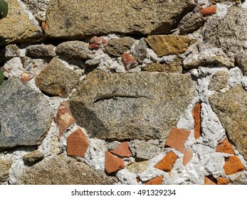 wall with salamander in sunlight