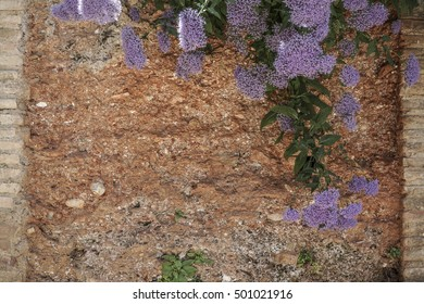 wall surrounded flowers