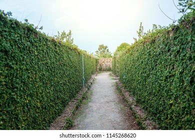 Wall walkway with 2 sides , A tree on an old  wall.