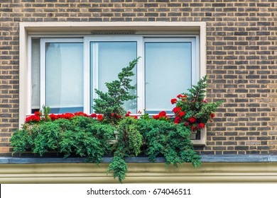 Wall, window and flowers