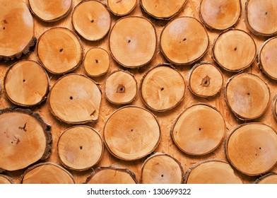 Wall of wood stump