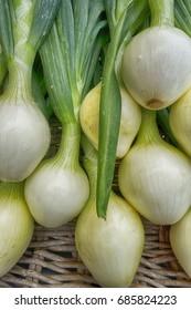 Walla-walla sweet onions for sale at an Astoria Oregon Sunday market