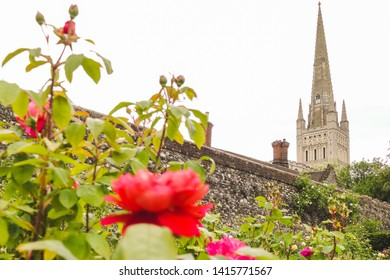 A walled garden with red roses in the foreground and the spire of Norwich Cathedral in the background. Norwich, England, UK