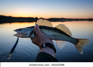 Walleye fishing at sunset