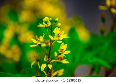 Wallflowers,  macro, close up, background.