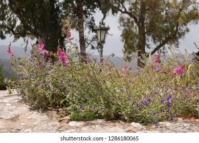 Wallflowers and wildflowers, Mijas old village