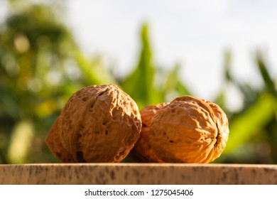 Wallnuts food on trunk wood as beautiful light and green nature background